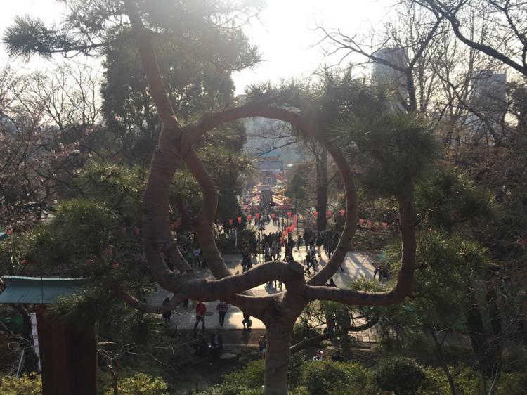 上野公園 月の松より