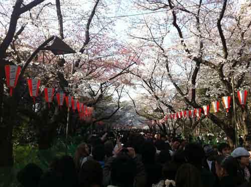 春の上野公園花見の季節