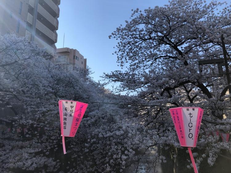 桜の季節の目黒川