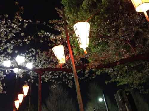 お花見時期はライトアップされます