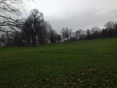 緑が豊かな公園