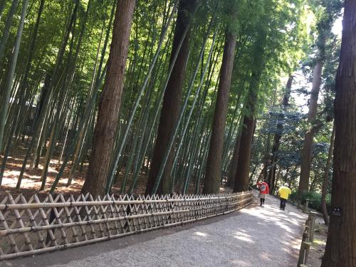 竹林の中の道