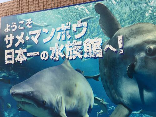 サメ・マンボウ日本一の水族館