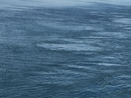 時間帯的に大きな渦潮はなかったが小さい渦潮がみられた