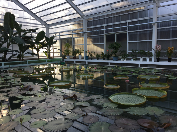 温泉の熱を利用した熱帯植物園