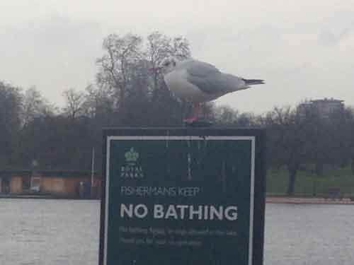池や水鳥も多い