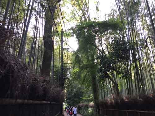 嵐山、竹林の道