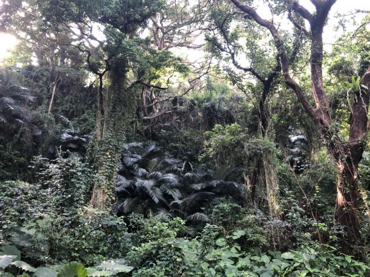 沖縄の植物に囲まれ自然豊か