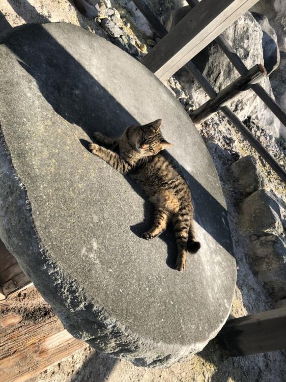 人なつっこい猫