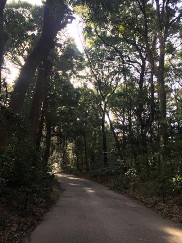 木々に囲まれている小道
