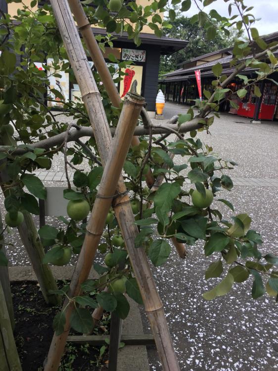 りんごの木とねぷた村の様子