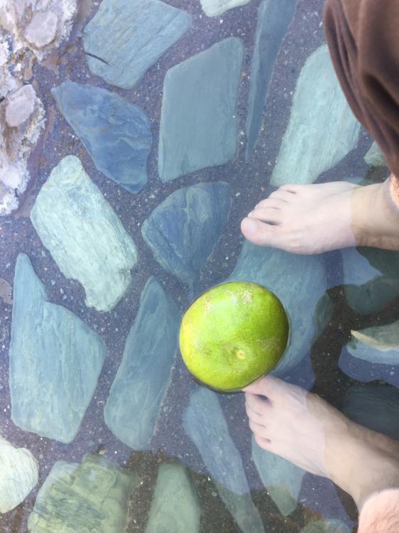 植物の果実が多数浮かんでいました
