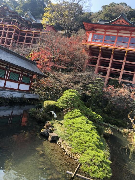 日本庭園と鶴