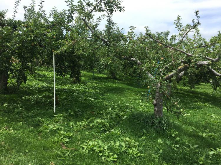 いろいろな種類のりんごの木々が植えられている