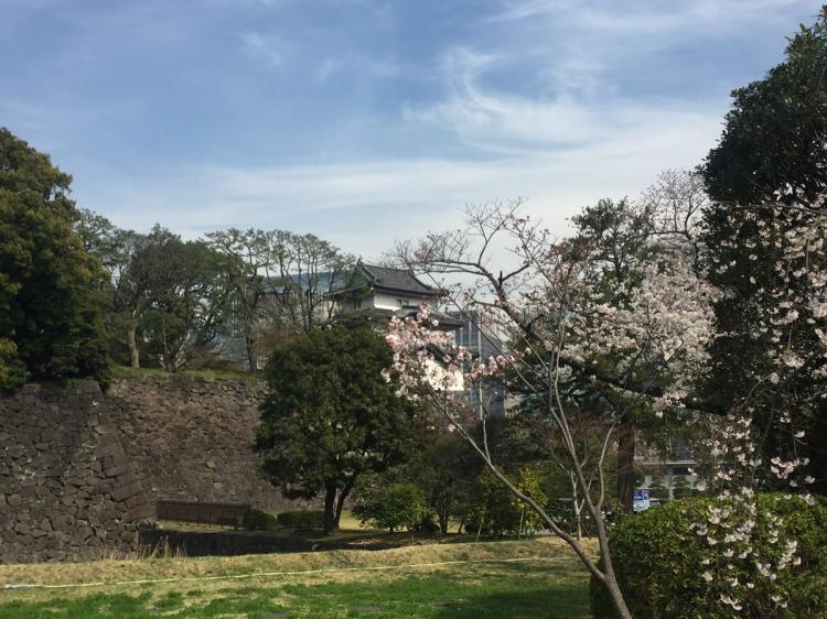 桜の時期に一般公開された際の写真