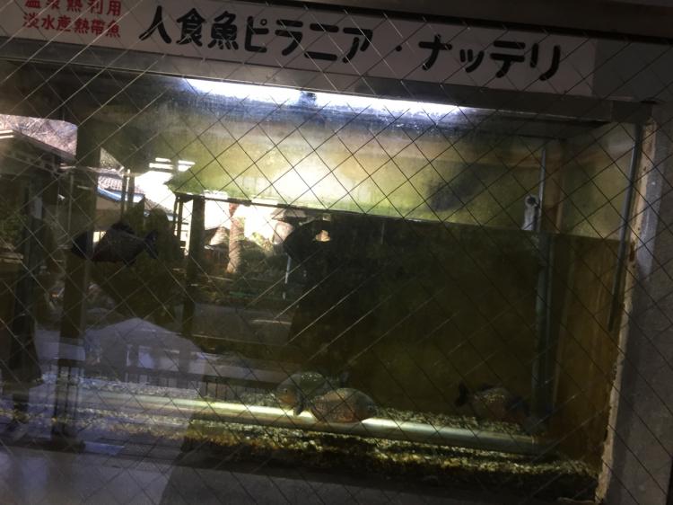 施設内にある熱帯魚水槽