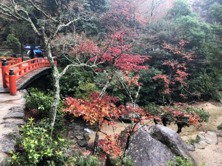 秋には紅葉谷公園にいくべき