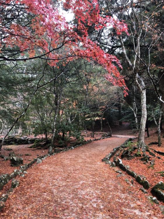 紅葉で埋め尽くされる道